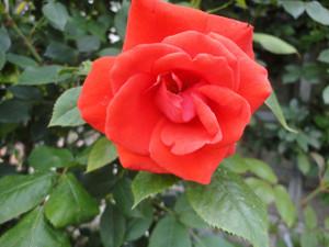 2012_0527_153847dsc00527